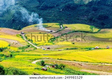 Harvest time on ripen rice terraces of the H'mong minority people in Y Ty, Lao Cai, Vietnam.  - stock photo