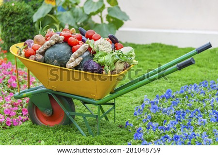 Harvest vegetable home garden