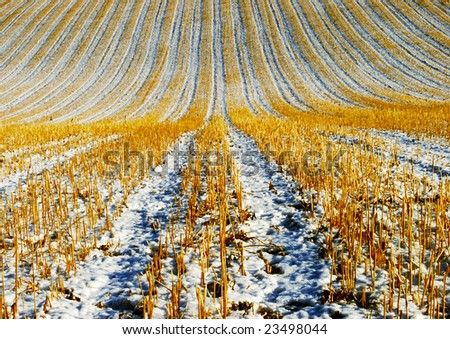Harvested agriculture field in winter
