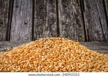 Harvested Barley on Rustic Old Barn Wood Background  - stock photo