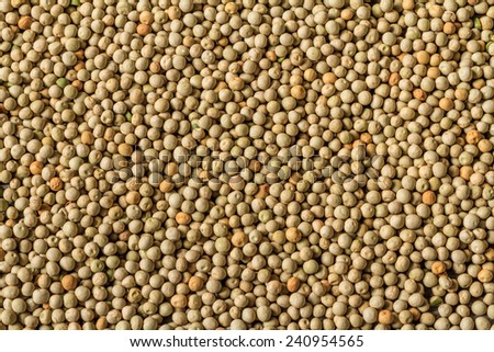 Harvested Dried Green Field Peas Background