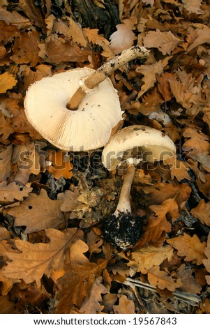 harvested edible mushrooms on the forest soil