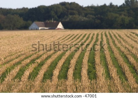 Harvested field - stock photo