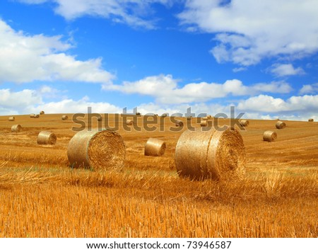 Harvested field with straw bales - stock photo