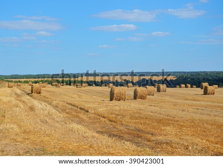 Harvested field with straw bales and clear blue sky. Summer landscape - stock photo