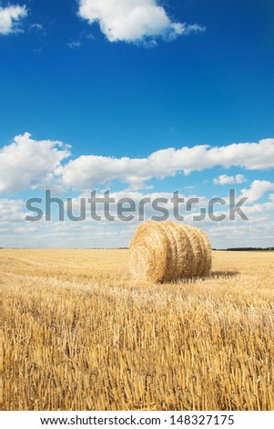 harvested field with straw bales in summer bright day with blue sky - stock photo
