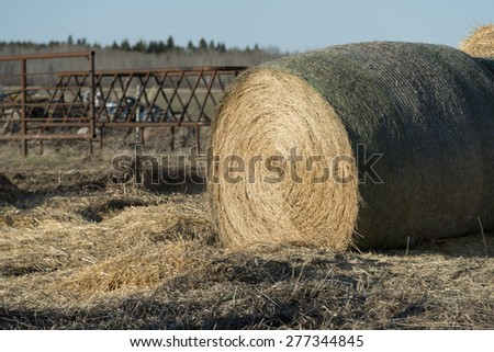 Harvested hay bale in a field, Manitoba, Canada - stock photo