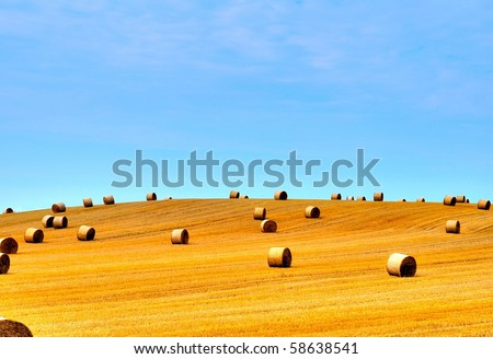 Harvested hilly wheat field - stock photo