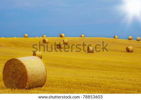 Harvested hilly wheat field with straw bale - stock photo