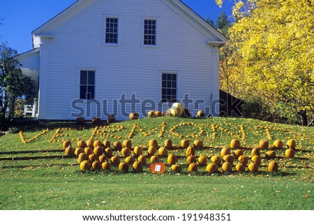 Harvested pumpkins along Scenic Route 100 in autumn, VT - stock photo