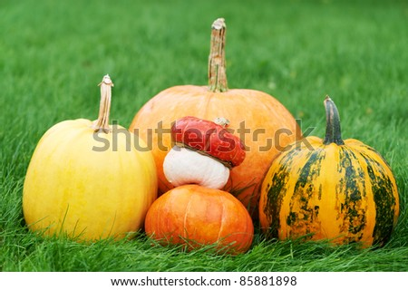 Harvested pumpkins on green grass outdoors - stock photo