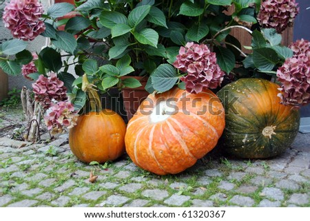 Harvested pumpkins on the ground at the entrance as welcome sign - stock photo