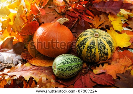 Harvested pumpkins with fall leaves - stock photo