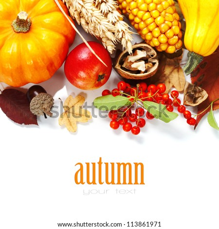 Harvested pumpkins with fall leaves, flowers and fruits over white - stock photo