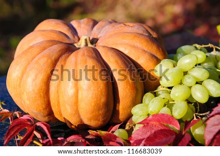 Harvested pumpkins with grapes and fall leaves - stock photo