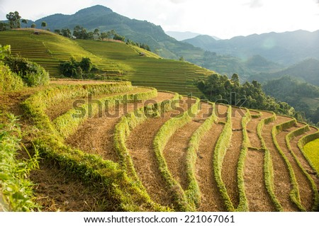Harvested rice terrace in Asia - stock photo