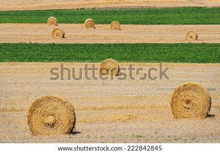 Harvested Straw Bales on Alternating Gold and Green Field - stock photo