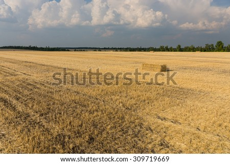 Harvested wheat field with remaining golden stubble of the wheat plants and a rectangular bale for fodder for livestock in winter stretching into the distance - stock photo