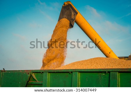 Harvester loading grain on a green container in the late summer - stock photo