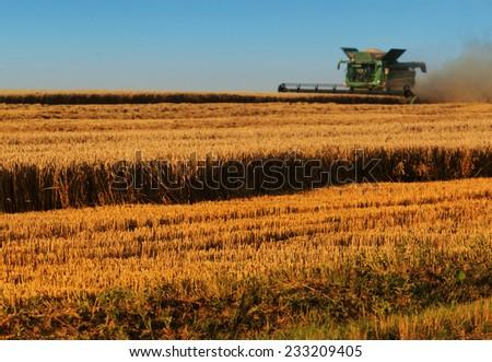 Harvester machine harvest cereal wheat - stock photo