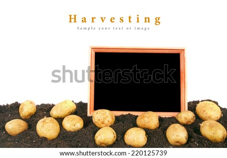 Harvesting. A potato and a framework on the earth. - stock photo