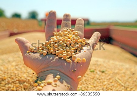 Harvesting and transportation of soybean - stock photo
