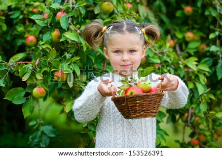Harvesting apples. Beautiful little girl helping in the garden and picking apples in the basket.