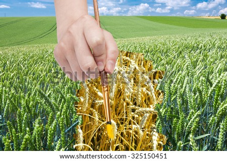 harvesting concept - hand with paint brush draws ripe ears of wheat in green field - stock photo
