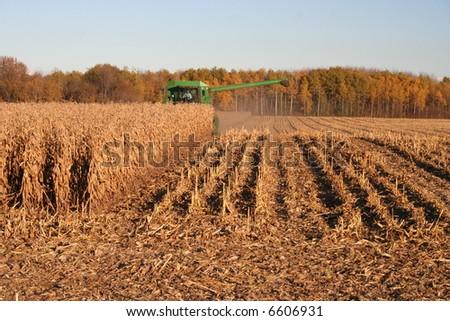 harvesting corn - stock photo