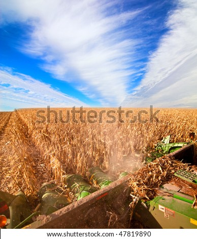 harvesting corn, view from on the combine - stock photo