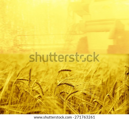 Harvesting machine on ripening ears of yellow wheat field on the sunset cloudy orange sky background of the setting sun on horizon backdrop of ripening ears of yellow wheat space - stock photo