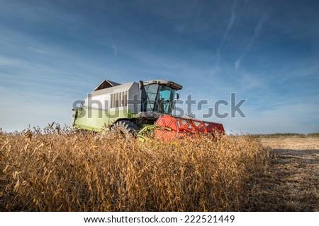 Harvesting of soy bean field  - stock photo