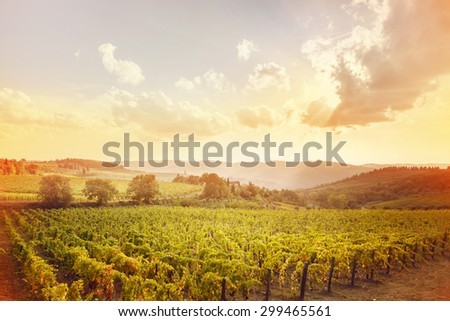 harvesting period in the Tuscan vineyard, Chianti, Italy - stock photo