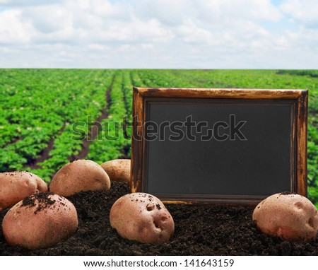 harvesting potatoes on the ground on a background of field - stock photo