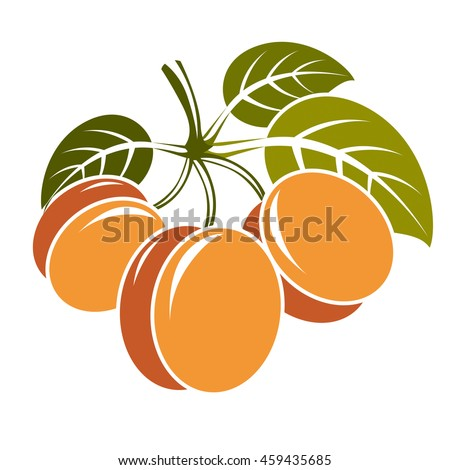 Harvesting symbol, fruits isolated. Three ripe organic sweet apricots with green leaves, healthy food idea design icon. - stock photo