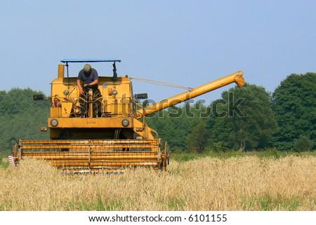 Harvesting wheat. - stock photo