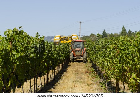 Harvesting wine grapes using a mechanical harvester and tractor in the Umpqua Valley OR - stock photo