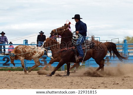 HASTINGS - October 24: A Cowboy's Lasso catches the Bull by the Horns Hastings New Zealand October 24 2008 - stock photo
