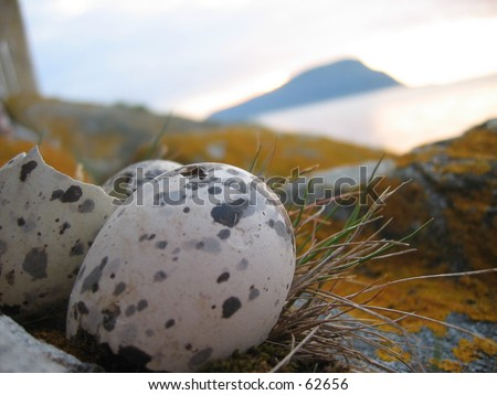 Hatched sea gal egg with island of Rogne in the background. - stock photo