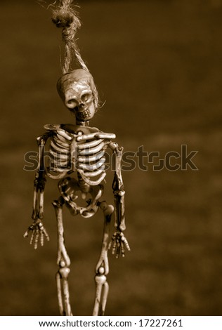 Haunted Hanging Halloween skeleton - stock photo