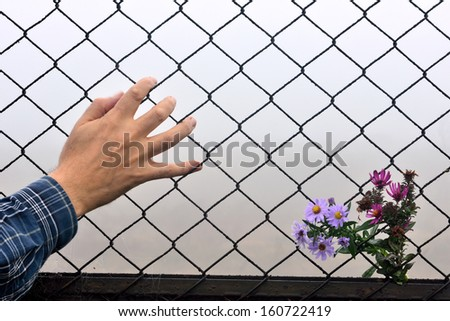 have entered the flower fence and the human hand