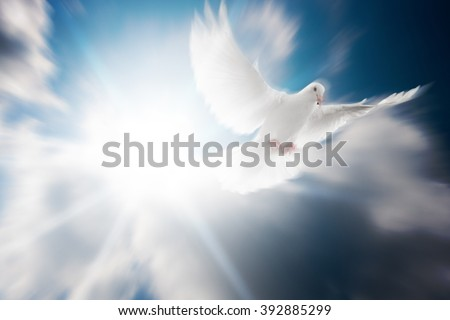 Free Funeral Backgrounds For Programs Image Gallery - HCPR