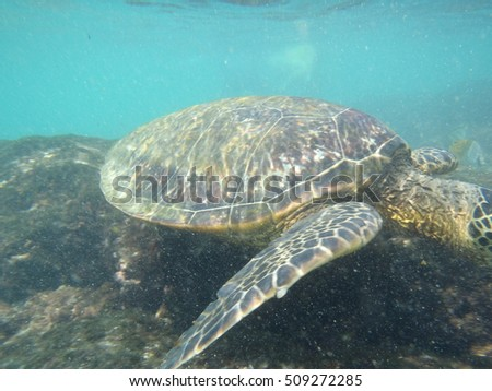hawaii turtle