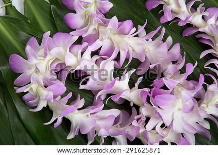 Hawaiian flowers lei necklace close-up - stock photo