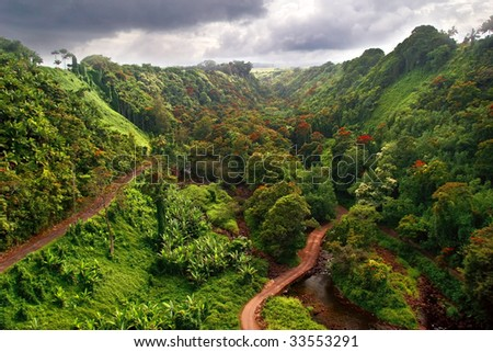 Hawaiian Jungle. Big island. USA - stock photo