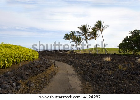 Hawaiian Palm Trees on Volcanic Lava Coast of Kona Island