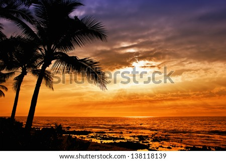 Hawaiian sunset with tropical palm tree silhouettes - stock photo