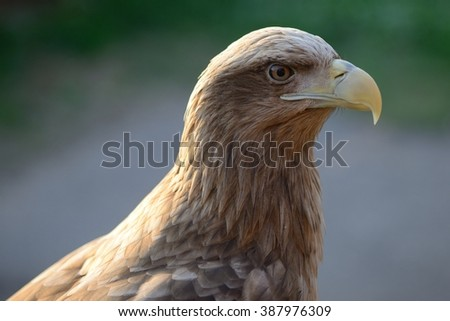 hawk - stock photo