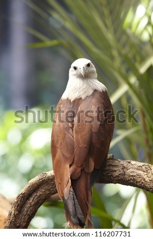Hawk on a tree - stock photo