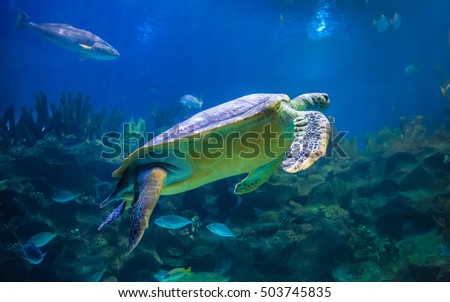 Hawksbill turtle swimming in underwater scene with coral reef  background